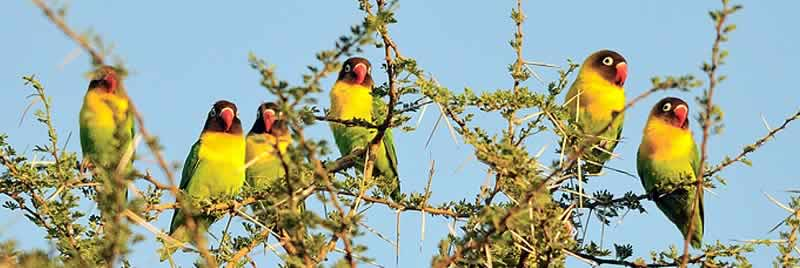 africa_serengeti_safaris_bird_watching_safaris