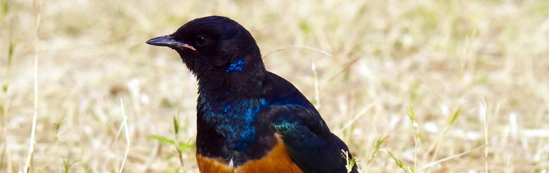 bird_ngorongoro_crater